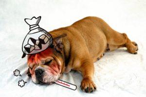 病気で寝込む犬